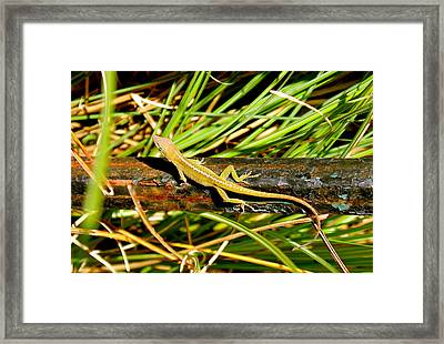 Framed Print featuring the photograph Lizard by Cyril Maza
