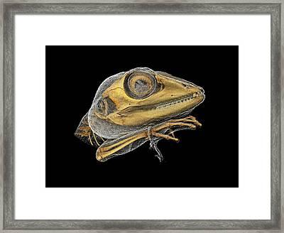 Lizard Framed Print by Dan Sykes/natural History Museum, London