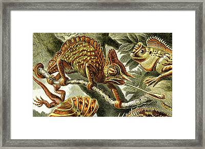 Lizard Detail I Framed Print by Unknown