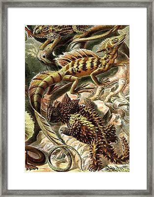 Lizard Detail II Framed Print by Unknown