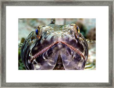 Lizard Fish Framed Print