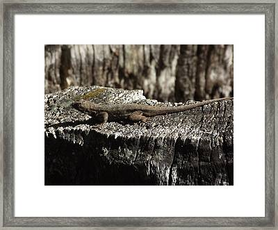Lizard In Thought Framed Print by James Rishel