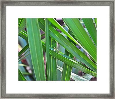 Lizard Lair Framed Print by Al Powell Photography USA