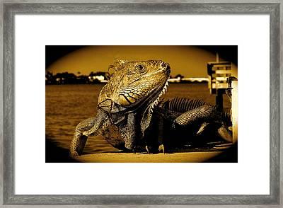 Lizard Sunbathing In Miami II Framed Print
