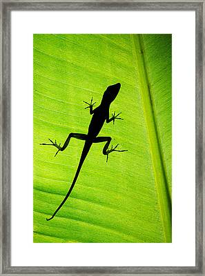 Lizard On Leaf, Sarapiqui, Costa Rica Framed Print by Panoramic Images