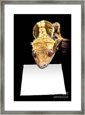Lizard With Blank Sign Framed Print by Simon Bratt Photography LRPS