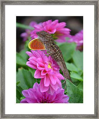 Lizzard Framed Print by Ben Kotyuk