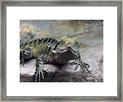 Framed Print featuring the photograph Lizzie's Gaze by Lingfai Leung