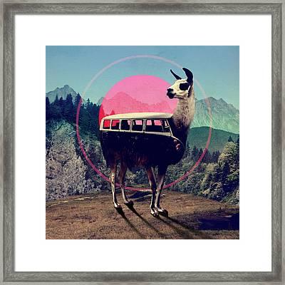 Llama Framed Print by Ali Gulec