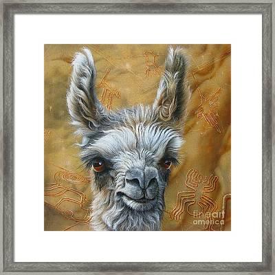 Llama Baby Framed Print by Jurek Zamoyski