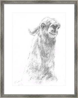 Framed Print featuring the drawing Llama Close Up by Andrew Gillette