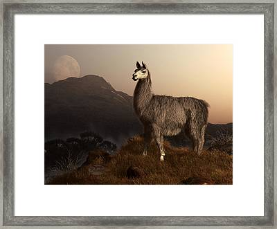 Llama Dawn Framed Print by Daniel Eskridge