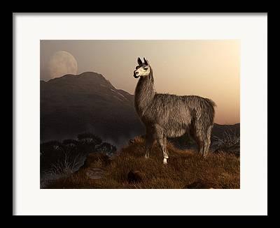 Peruvian Llama Framed Prints