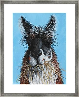 Llama Portrait Framed Print