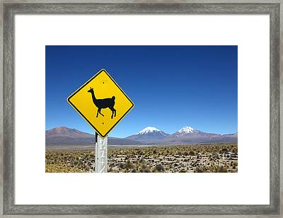 Llamas Crossing Sign Framed Print by James Brunker