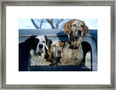 Llewellyn Setters Framed Print by William H. Mullins