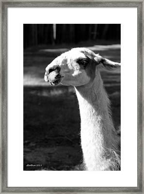 Lloyd Framed Print by Dick Botkin