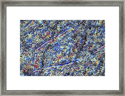 Lm Of A Polished Section Of Cobalt Framed Print by Alfred Pasieka