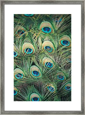 Loads Of Feathers Framed Print
