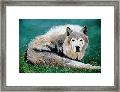 Lobo Framed Print