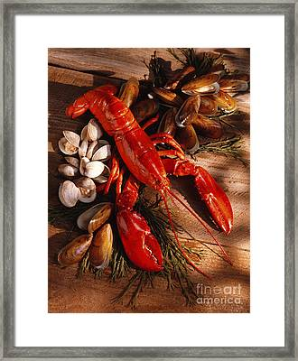 Lobster Clams And Mussels On Seaweed Framed Print