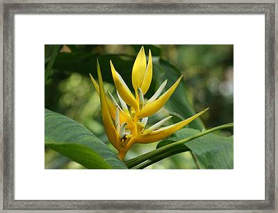 Framed Print featuring the photograph Lobster Claw by B Wayne Mullins