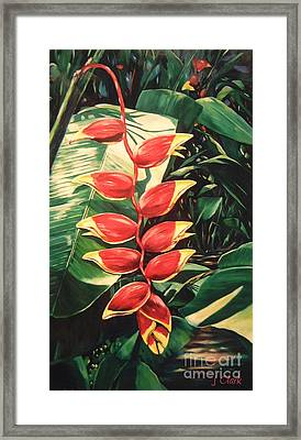 Lobster Claw Heliconia Framed Print by John Clark