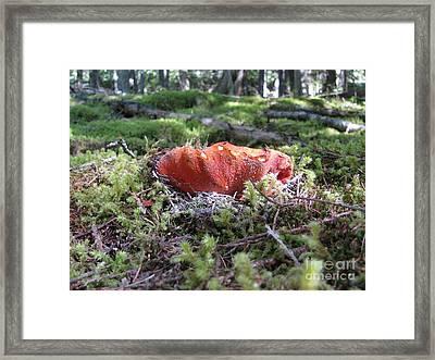 Lobster Mushroom Framed Print by Leone Lund