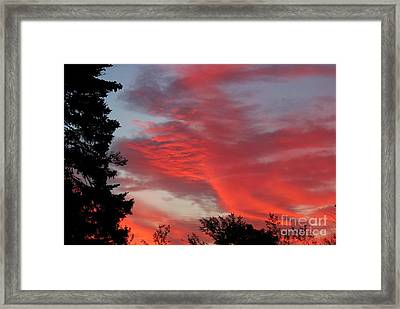 Lobster Sky Framed Print by Barbara Griffin