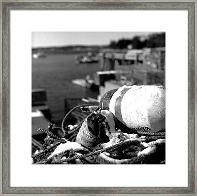 Lobster Traps 07 Framed Print by Timothy Bischoff