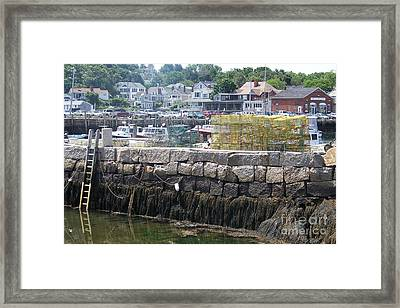 Framed Print featuring the photograph New England Lobster by Eunice Miller