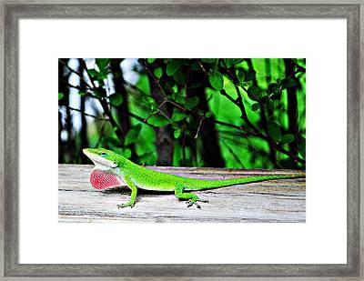 Local Lizard Framed Print by Stephanie Grooms