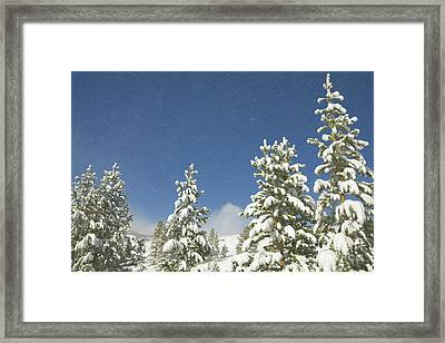 Lodgepole Pines In The Wind Framed Print