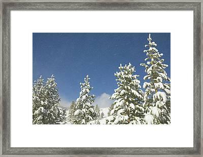Lodgepole Pines In The Wind Framed Print by Yva Momatiuk John Eastcott