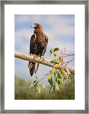 Lofty Visions - Wedge-tailed Eagle Framed Print