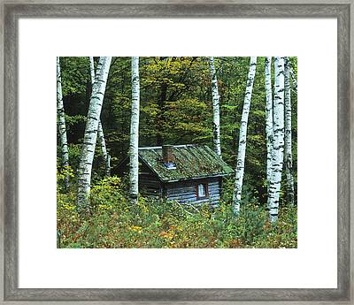 Log Cabin In The Birch Forest Vermont Framed Print