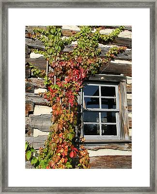 Log Cabin Ivy Framed Print
