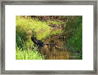 Log In Stream Framed Print