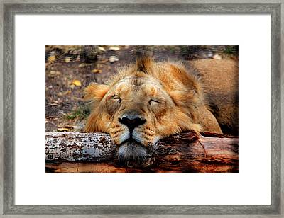 Logged Out Framed Print by Larry Trupp