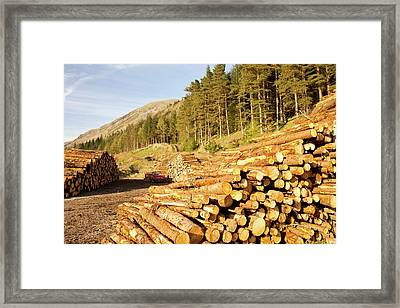 Logging On The Slopes Above Thirlmere Framed Print by Ashley Cooper