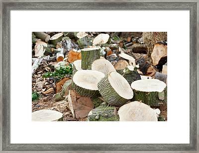 Logging Operation Framed Print