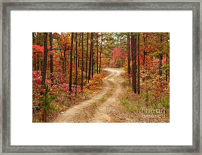 Logging Road In The Ouachita National Forest - Beaver's Bend State Park - Poteau - Oklahoma Arkansas Framed Print