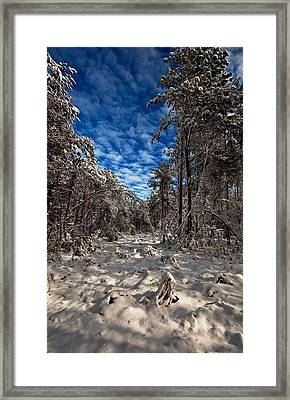 Logging Trail  Framed Print