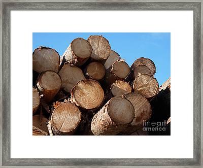 Logs In Sunlight  Framed Print