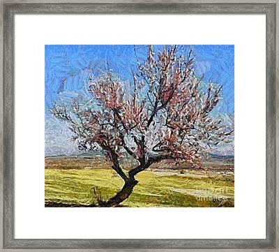 Lone Almond Tree In Bloom Framed Print by Dragica  Micki Fortuna