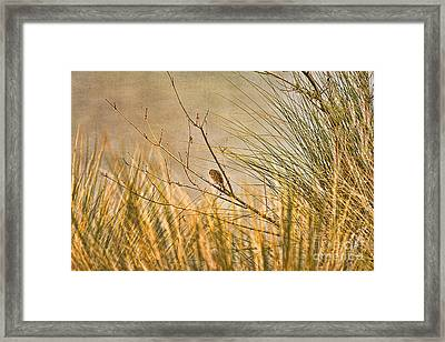 Framed Print featuring the photograph Lone Bird by Anne Rodkin