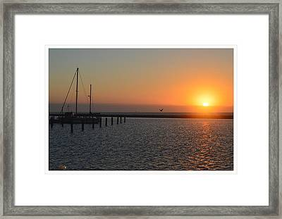 Lone Bird At The Marina Framed Print