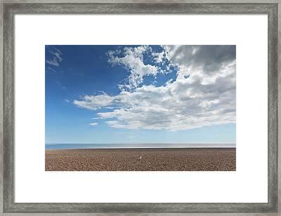 Lone Bird On An Empty Beach With Blue Framed Print