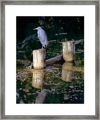 Lone Bird Framed Print