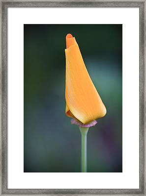 Lone Bud Framed Print